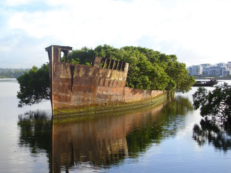 Брошенное судно, заросшее местными невысокими деревцами, - Сидней, Австралия. Судну более 100 лет.