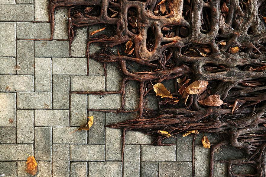 корни повторяют форму промежутков между камнями мостовой
