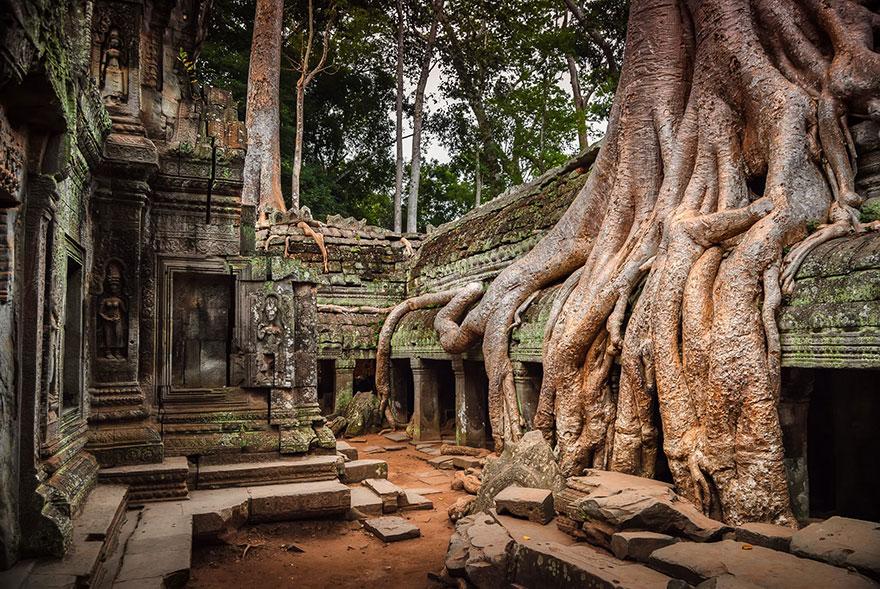 Храмовый комплекс, тонущий в корнях деревьев - Ангкор, Камбоджа