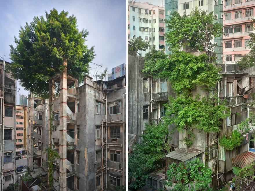 деревья и кусты, проросшие сквозь бетонные здания