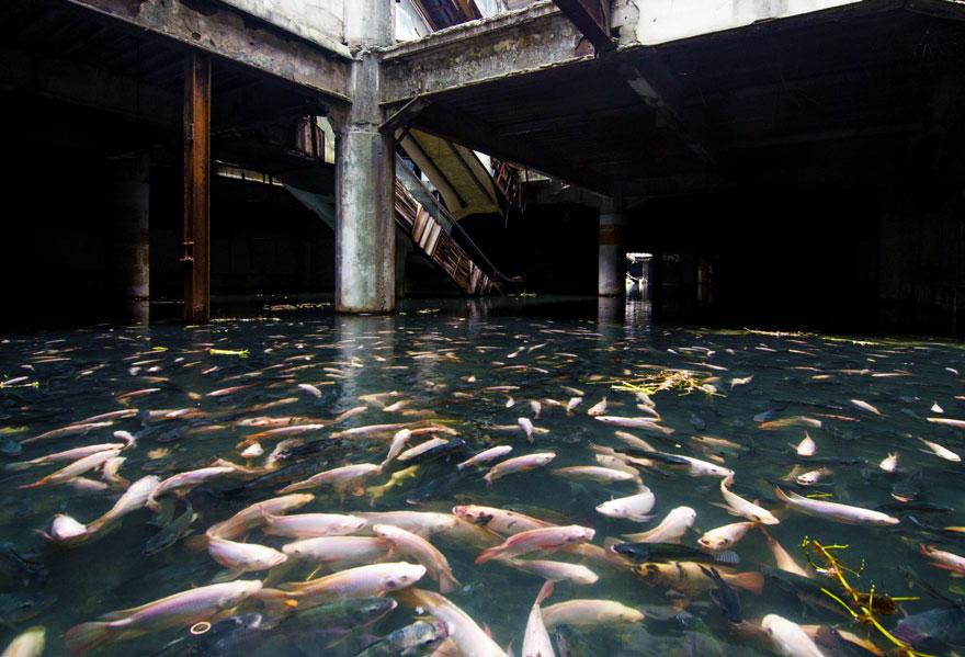 Затопленный и захваченный мириадами рыб заброшенный торговый центр – Бангкок, Таиланд.