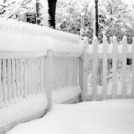 Как оживить сад в зимнее время