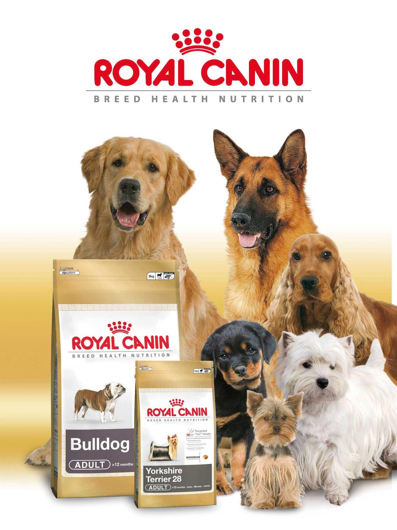 Как выбрать корма Royal Canin