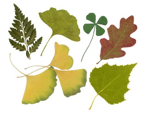 Прижмите к нему высушенные осенние листья