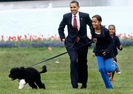 Если ребенок достаточно взрослый и с вашей собакой достаточно легко справиться, покажите ему, как держать поводок