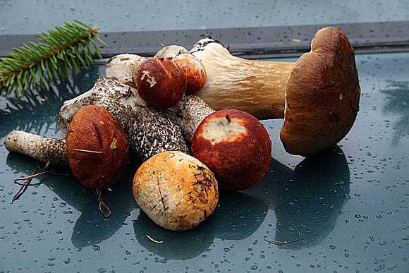 Как лечатся с помощью грибов