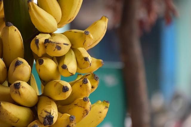 выращивание бананов дома