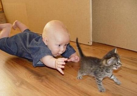 никакая игрушка так не разовьет координацию малыша, как стремление поймать кота