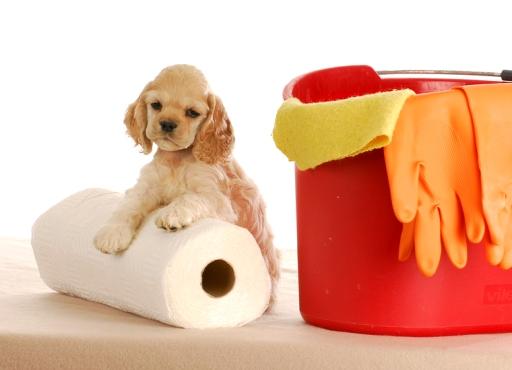 Как подготовиться к появлению щенка в доме