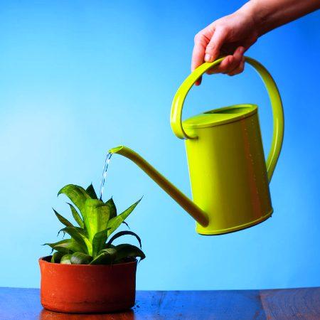 Как выращивать комнатные растения и цветы