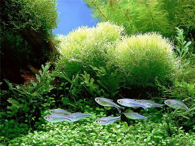 Как правильно оформить домашний аквариум?