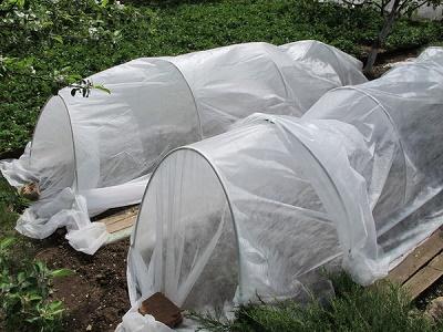 Как сохранить рассаду от заморозков