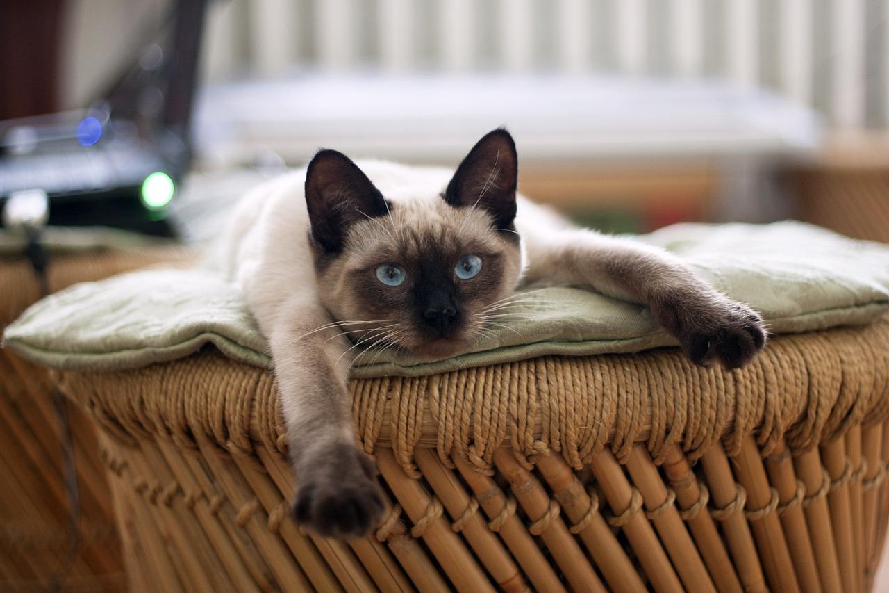 Как убрать и что делать, если в доме появился запах кошачьей мочи