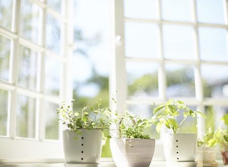 Приобретите или возьмите отростки и сами посадите несколько летних растений в горшках
