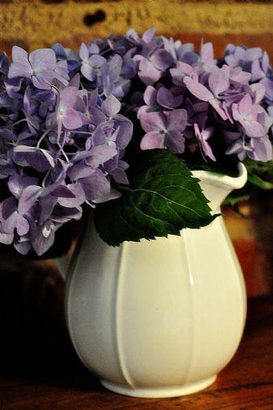 Используйте белый сливочник или кувшин, чтобы поставить в него летние садовые цветы