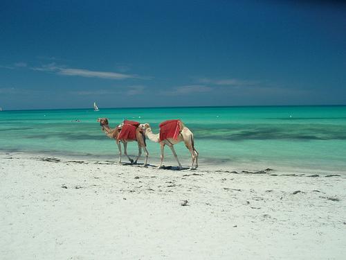 Как отлично отдохнуть в Тунисе