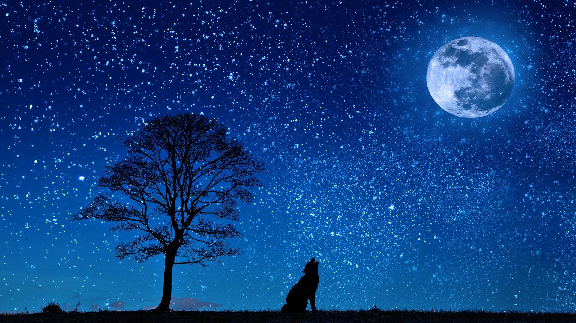 вой волка на луну