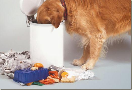 Как избавиться от запаха изо рта у собак?