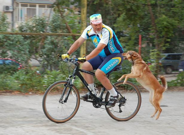 бродячая собака набрасывается на велосипедиста