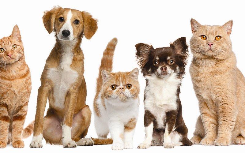 Как и какие особенности стрижки кошек и собак