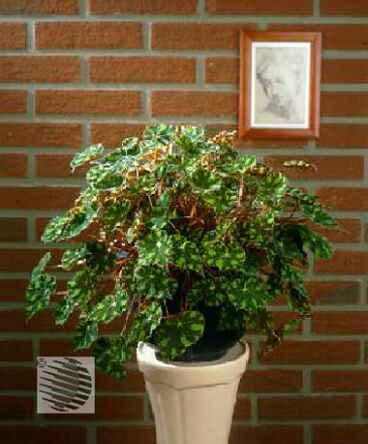 Как уберечься от вредных комнатных растений