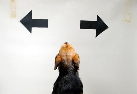Как не сомневаться и делать выбор быстрее!