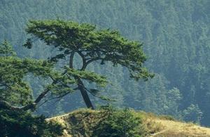 Как растут деревья