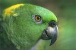 Как обучать попугаев