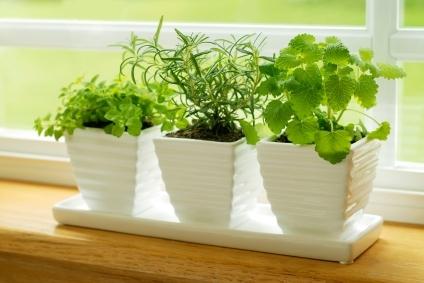 Нет загородного участка? Не беда, вы всегда можете создать свой маленький огородик дома