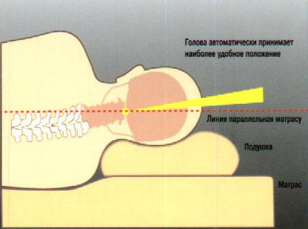 в середине наблюдается небольшое углубление под голову, в то время как на края снабжены увеличенными валиками под шею