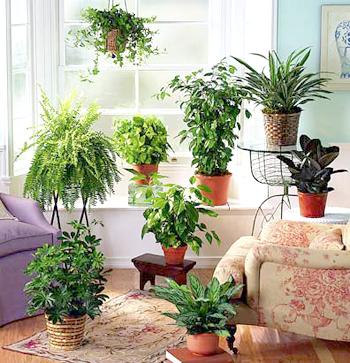 Как сделать искусственный полив комнатным растениям на время Вашего отъезда