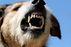уличная бродячая собака скалится
