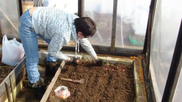 Как вести подготовку теплицы весной к высадке рассады. Часть 2