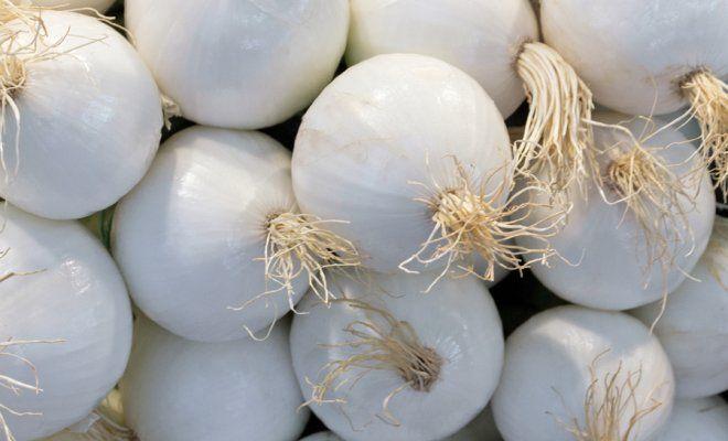 Как вырастить репчатый лук из семян