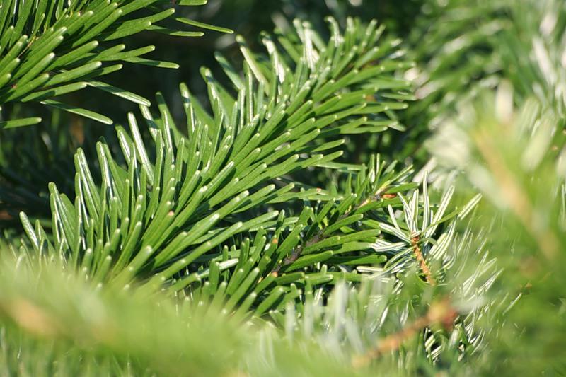 Как правильно установить новогоднюю елку: советы и рекомендации