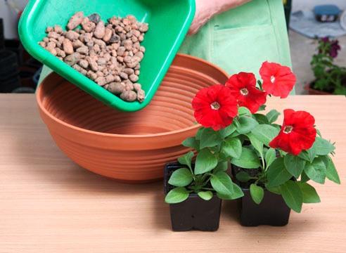 Как выращивать цветы на балконе