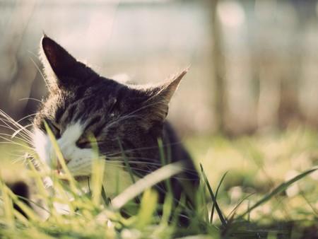 Как уберечь кошку от опасных комнатных растений?
