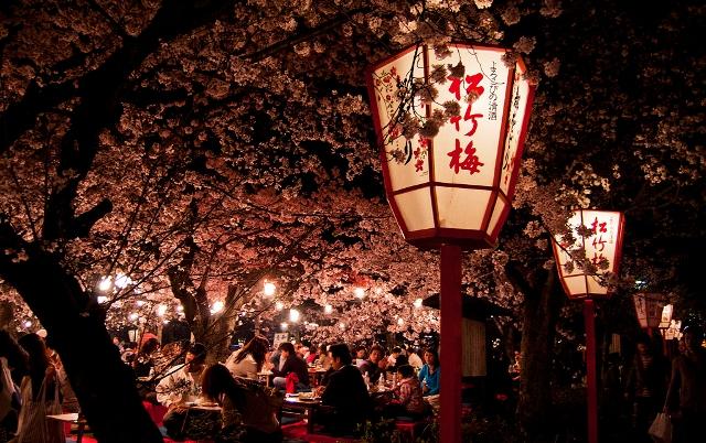 Как цветет сакура в Японии