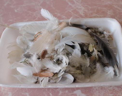 Как легко сделать настольную елочку из перьев?