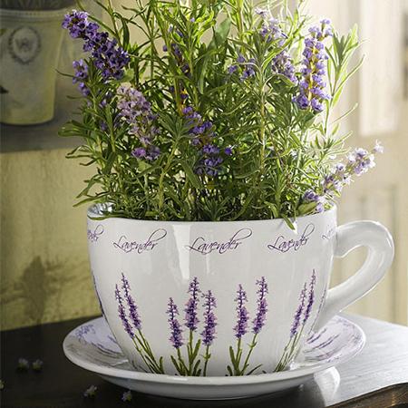 Купите в дом/квартиру несколько комнатных растений