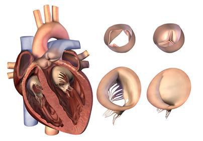 сердце – это у нас мускул, его нужно тренировать