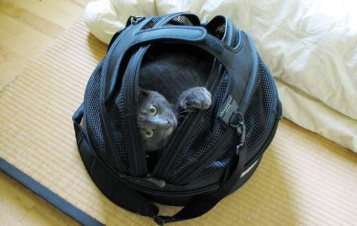 Как правильно выбрать переноску для котенка?