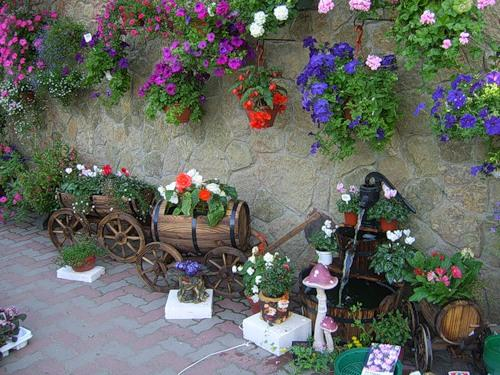 Мне нравится когда цветы висят в кашпо.Сейчас в магазинах большой выбор различных кашпо.У моей подруги вся стена...
