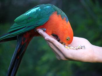 Как ухаживать за попугаями