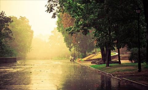 осень, парк дождь лужи