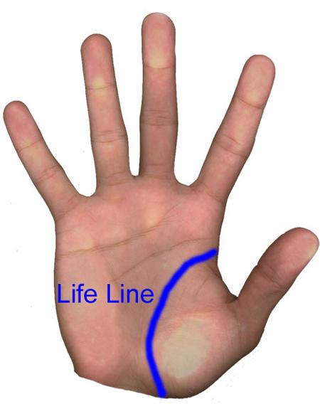 Поищем линию жизни. Она начинается на правой стороне ладони у края ладони и заканчивается близко к запястью