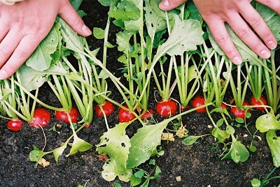 Как и что делать в саду и огороде в августе