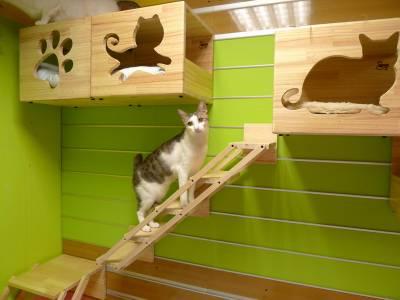Дом для коте из фанеры