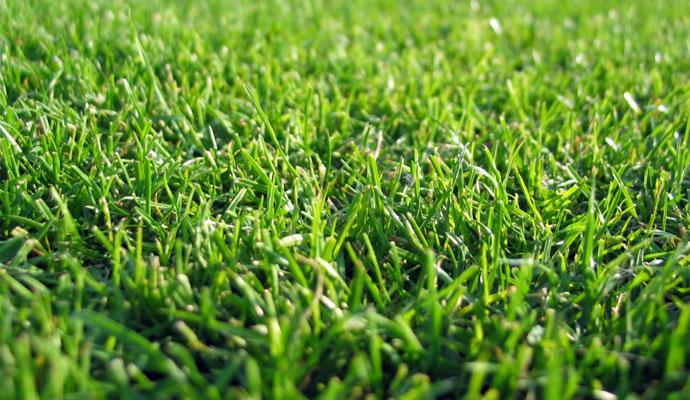 короткая трава