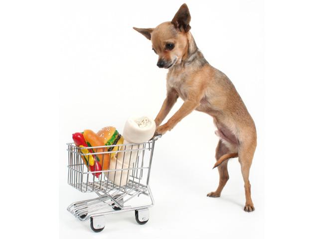 Как ухаживать за карликовыми породами собак?